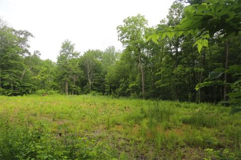 22 Acres County Road 172 Chesterville Ohio 43317
